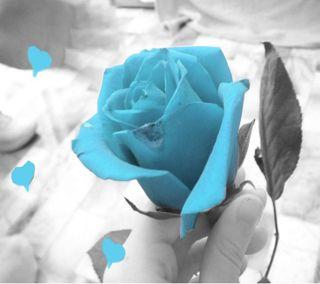 Обои на телефон розы, прекрасные