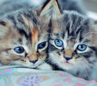 Обои на телефон коты, милые, кошки