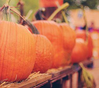 Обои на телефон тыква, хэллоуин, осень, оранжевые