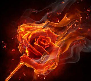 Обои на телефон пламя, цветы, розы, огонь