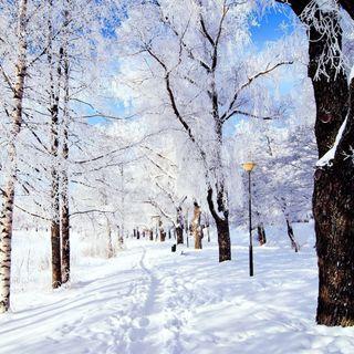 Обои на телефон лед, снег, путь, природа, зима, winter path
