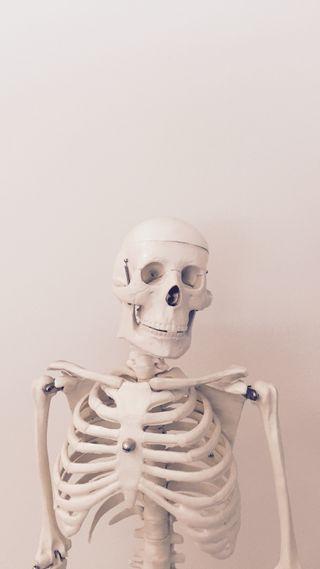 Обои на телефон человек, скелет, череп, тело, кости, белые