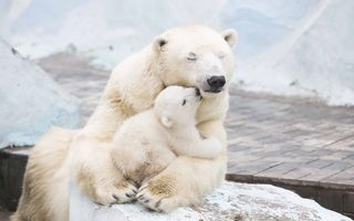 Обои на телефон полярный, медведи, животные