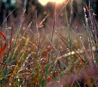Обои на телефон роса, мокрые, утро, трава, природа