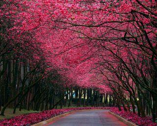 Обои на телефон путь, цветы, розовые, природа, прекрасные, дорога, tress, hd