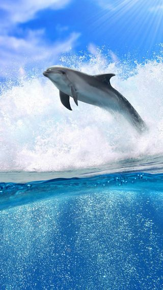 Обои на телефон летать, дельфины, fly dolphin