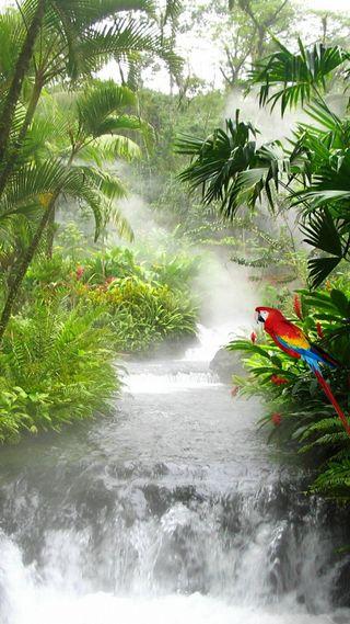 Обои на телефон джунгли, птицы, попугай, осень, листья, деревья, вода