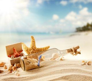 Обои на телефон солнечный свет, ракушки, пляж, песок, лето