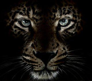 Обои на телефон леопард, тигр