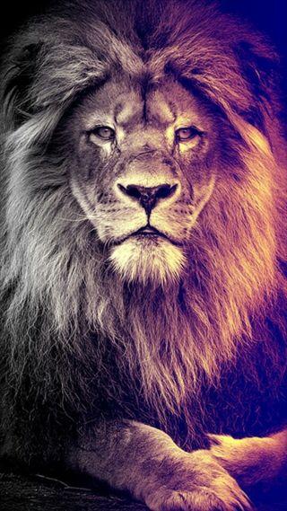 Обои на телефон черные, лицо, лев, король, аслан, land