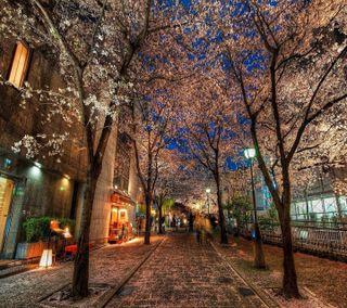 Обои на телефон улица, приятные, природа, пейзаж, осень, новый, листья, деревья, город