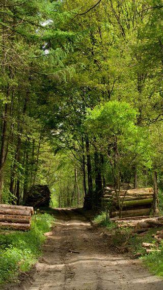 Обои на телефон прогулка, путь, лес