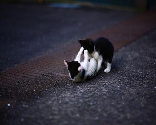 Обои на телефон питомцы, милые, любовь, коты, животные, love