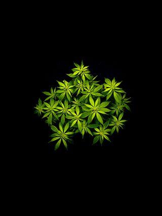 Обои на телефон покинуть, марихуана, листья, бум, w**d 3, joint, herbe, dope, blunt