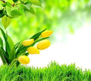 Обои на телефон тюльпаны, листья, зеленые, весна