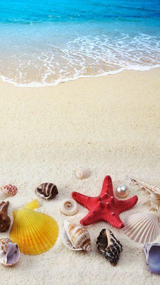 Обои на телефон раковина, песок, море, лето