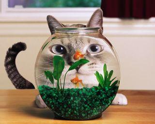 Обои на телефон рыба, милые, кошки, забавные, вода