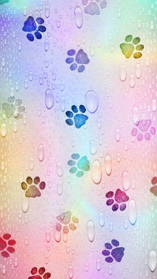 Обои на телефон feet, pawprints, paws, rainbow paw prints, абстрактные, красочные, вода, цветные, шаблон, кошки, радуга, дождь, капли, животные, фан, котята, яркие, питомцы, кошачий, лапа