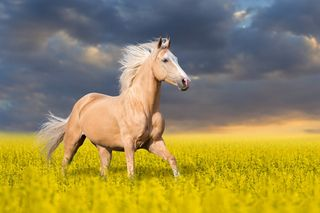 Обои на телефон лошади, приятные, природа, лошадь, животные
