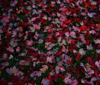 Обои на телефон осень, природа, пейзаж, листья, красые