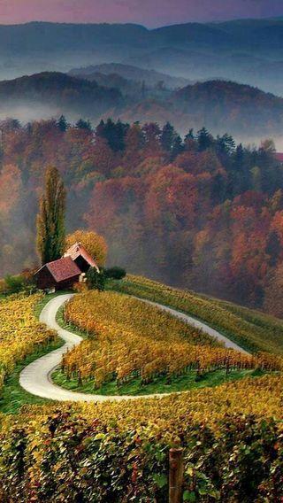 Обои на телефон осень, сердце, природа, любовь, дорога, love