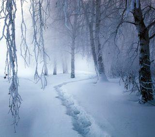 Обои на телефон прогулка, снег, путь, пути, лес, зима, деревья, ветви