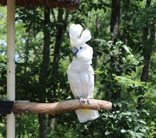 Обои на телефон попугай, природа, животные