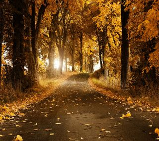 Обои на телефон солнечный свет, природа, осень