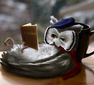 Обои на телефон книга, сова, sowa, reads