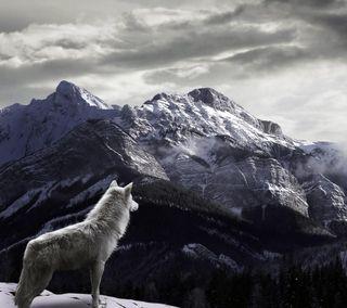 Обои на телефон любовь, горы, волк, wolf in mountain, love