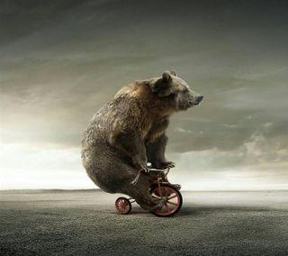 Обои на телефон медведь, маленький, байк, fat, big