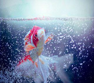 Обои на телефон рыба, рокки, пузыри, птицы, природа, новый, милые, любовь, крутые, капли, вода, love, fish bubbles hd, 2012