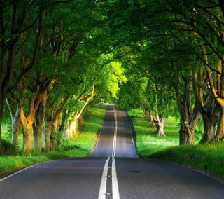 Обои на телефон взгляд, приятные, зеленые, дорога, green road