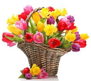 Обои на телефон тюльпаны, цветы, красочные, весна, colorful tulips, busket