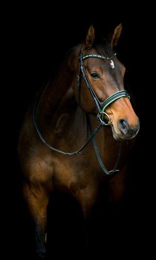Обои на телефон 1080p, 4k, hd, черные, крутые, милые, животные, лучшие, лошадь