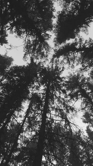 Обои на телефон вид, черные, темные, природа, небо, лес, деревья, дерево, dark woods, backandwhite