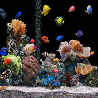 Обои на телефон aquarium-hd, рыба, аквариум