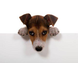 Обои на телефон щенки, собаки, животные, hey, cure