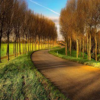 Обои на телефон path autumn, милые, приятные, прекрасные, взгляд, осень, путь