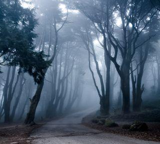 Обои на телефон туман, путь, темные, лес, деревья, gloomy