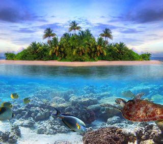 Обои на телефон черепаха, рыба, природа, пляж, пейзаж, пальмы, остров, море, камни