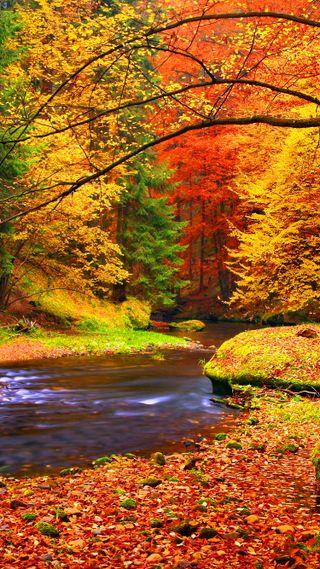 Обои на телефон река, природа, прекрасные, пейзаж, осень