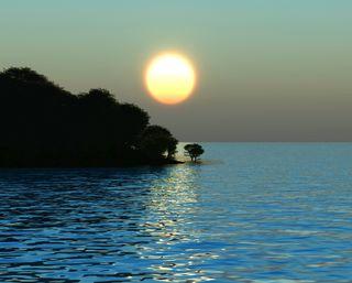 Обои на телефон берег, утро, солнце, силуэт, море, деревья, волна