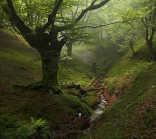 Обои на телефон туман, лес, деревья
