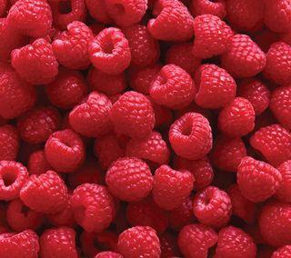 Обои на телефон ягоды, фрукты, свежие, красые, raspberries