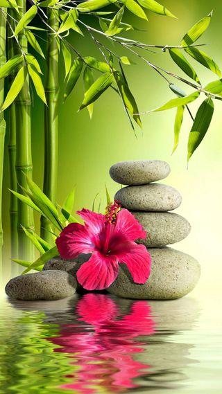 Обои на телефон дзен, цветы, листья, красые, камни, зеленые, вода, zen stones, reflexion