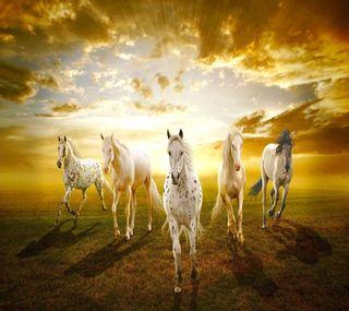 Обои на телефон лошади, животные