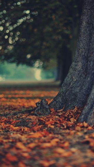 Обои на телефон осень, листья, дерево