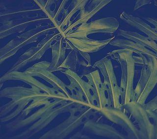 Обои на телефон флора, джунгли, природа, лес, зеленые