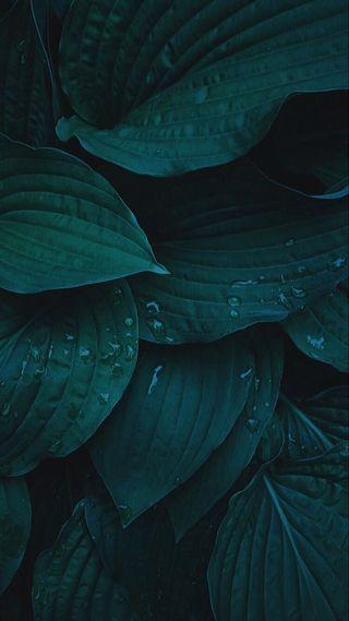 Обои на телефон листья, природа, капли воды, зеленые